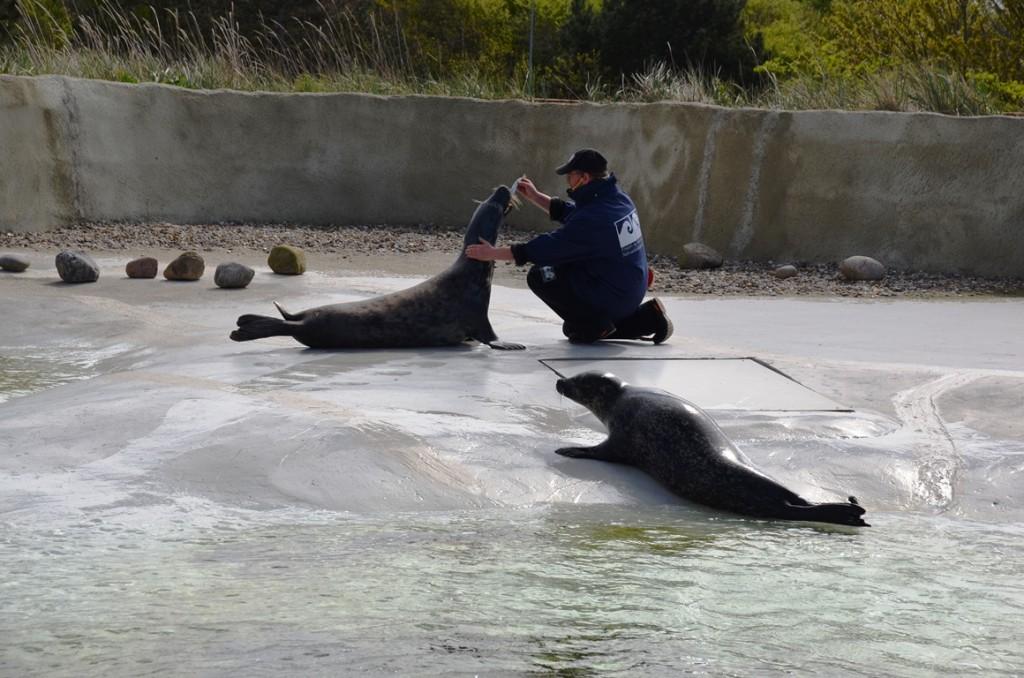 esbjerg zeehonden voeren