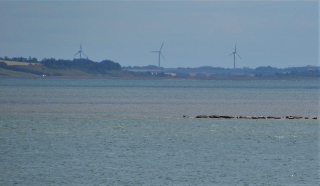 nationaal park Thy zeehonden