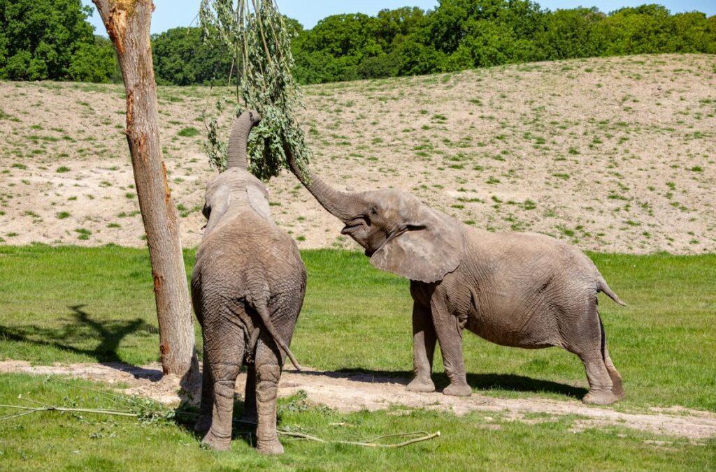 knuthenborg safaripark